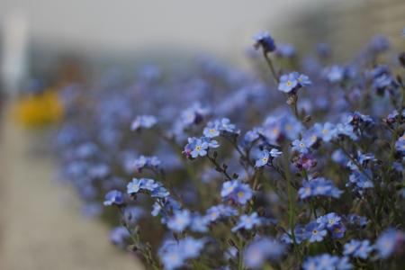 꽃-화분-자연-식물-봄