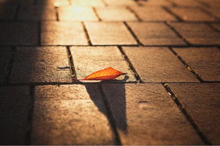 단풍-풍경-가을-나뭇잎-햇살