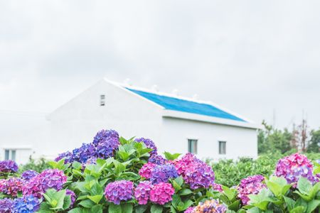 식물-파란집-수국-flower-plant