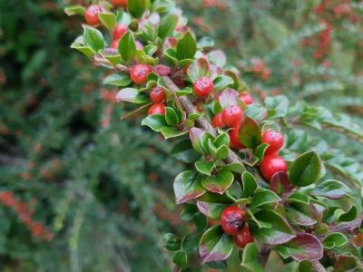 식물-열매-빨간색-초록색-자연