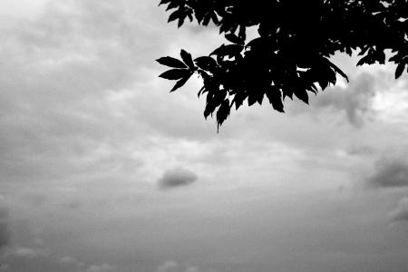 하늘-나무-구름-흑백-자연