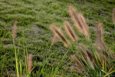 수크렁-청라-호수공원-꽃-노을빛