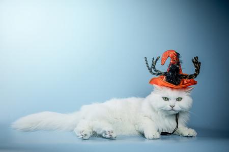 할로윈-고양이-이벤트-모자-축제