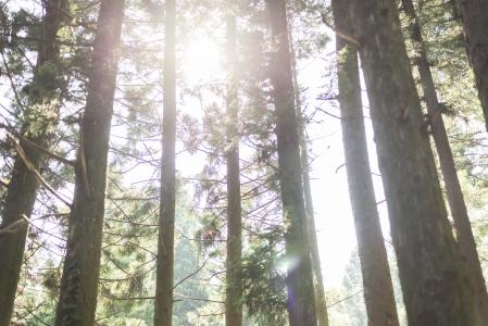 편백나무숲-여행사진-햇살-숲-햇빛
