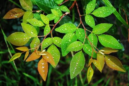 자연-이슬-풀잎-식물-그린