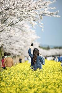 제주-봄-유채꽃-하늘-도로