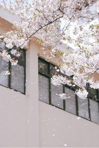 벚꽃-꽃비-꽃-나무-봄