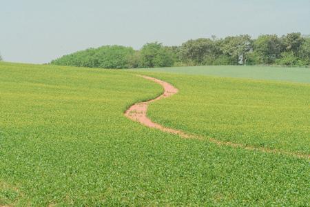 plant-식물-잔디-하늘-풍경