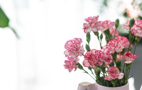 카네이션-꽃-어버이날-봄-화사한