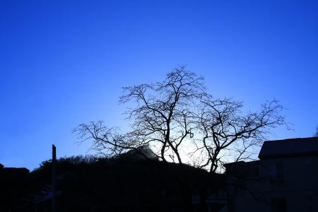 실루엣-시골-노을-나무-풍경