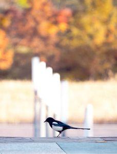 bird-새-animal-동물-가을