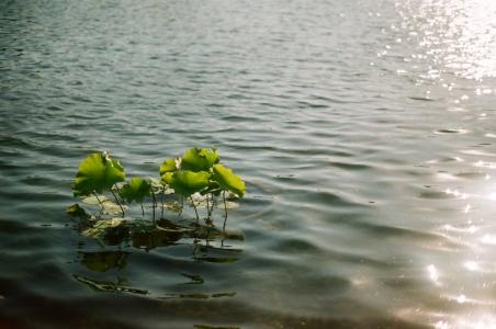 자연-물-강-햇빛-식물