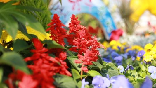 꽃-아름다움-축제-즐거움-목포항구축제