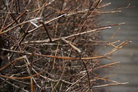 마른나뭇가지-겨울-담장-골목길-3월
