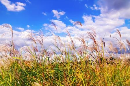 가을-갈대-하늘-풍경-하천