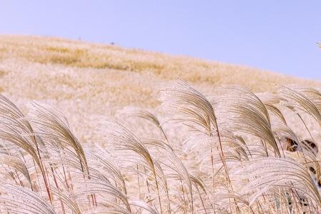 갈대-억새-가을-바람-공원