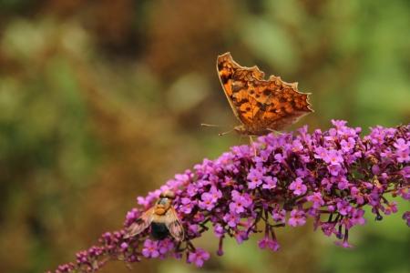 나비와벌-꽃-곤충-탐색전-주황과분홍