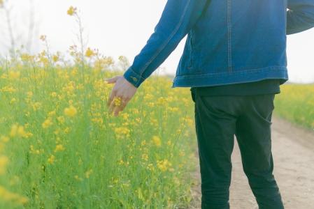 유채꽃-꽃밭-꽃-자연-감성