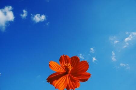 꽃-날씨-화창-꿈-행복