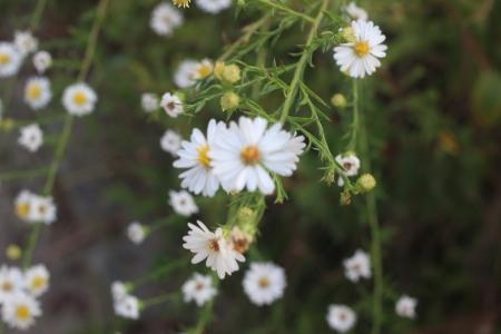 꽃-계란후라이꽃-자연-들꽃-아웃포커싱