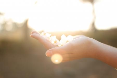 사람-손-벚꽃-햇살-따뜻함