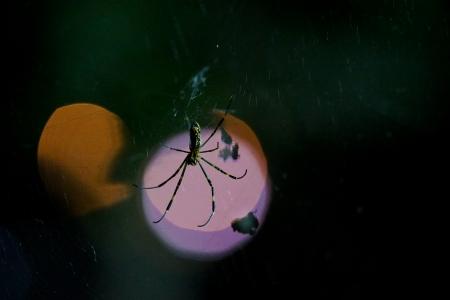 빛-빛망울-곤충-거미-벌레