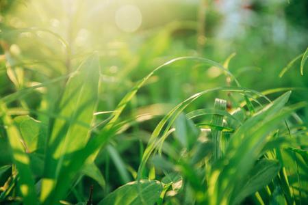 풀-풀잎-자연-빛-햇살
