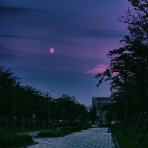 보름달-저녁-보라-길거리-구름