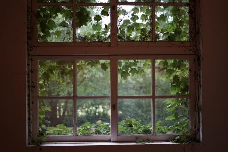 창문-교실-덩쿨-옛생각-감성