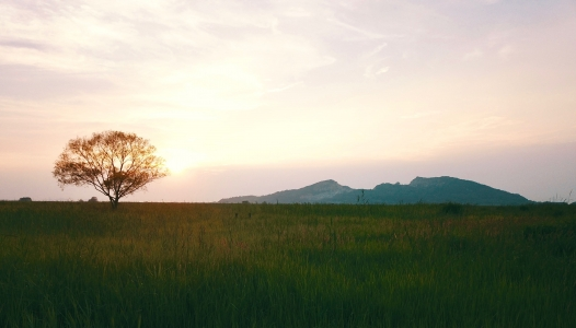 초원-왕따나무-일몰-들판-선셋