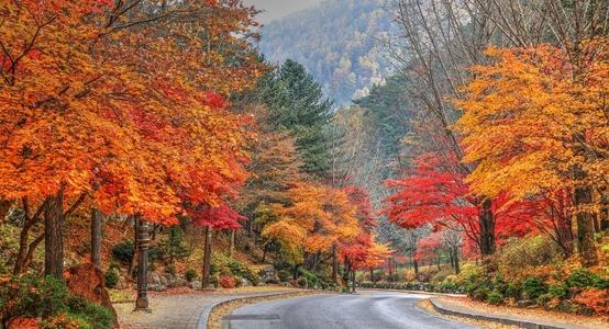 가을-구인사-단풍-절-단풍길