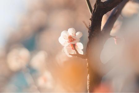 매화-봄-계절-꽃-flower