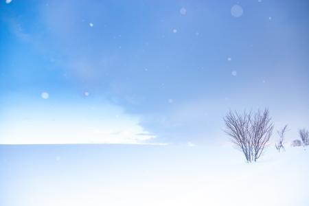 눈-폭설-자연-풍경-홋카이도