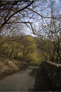 산수유-나무-하늘-파란하늘-꽃봉오리