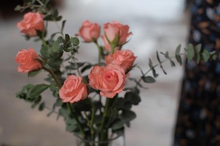 장미-꽃-인테리어-식물-분홍장미