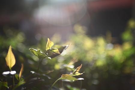 식물-문래-문래동-문래예술촌-예술촌