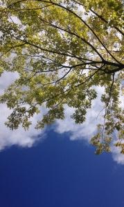 하늘-구름-나무-맑음-공기