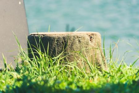나무-풀-자연-감성-한여름