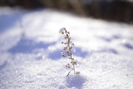 야생화-눈-눈부심-겨울-추위