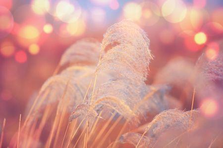식물-가을-억새-계절-빛망울