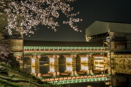 경주-야경-월정교-벚꽃-다리