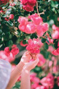 flower-blossom-꽃-plant-식물