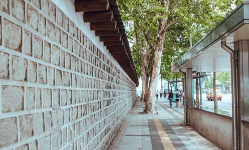 덕수궁-돌담길-서울-여름-나무