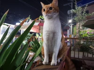 고양이-편의점-장화신은고양이-귀엽다-냥