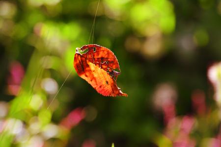 가을-낙엽-보케-거미줄-가을서정