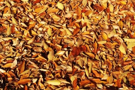 나뭇잎-낙엽-공원-가을-야외