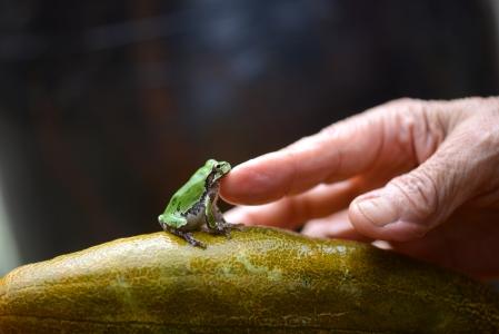 생명-청개구리-주름-정-교감