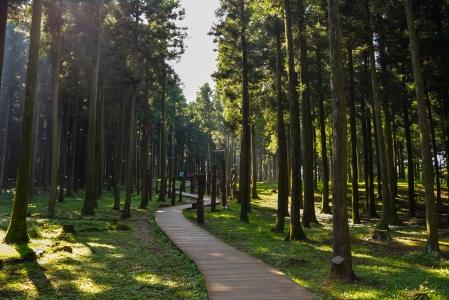숲길-절물자연휴양림-제주도-자연-풍경