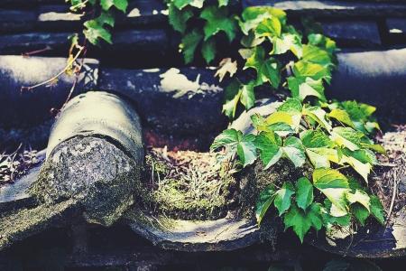 담장-전통-전통가옥-기와-담쟁이덩굴