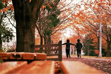 단풍-단풍잎-삼락공원-maple-가을